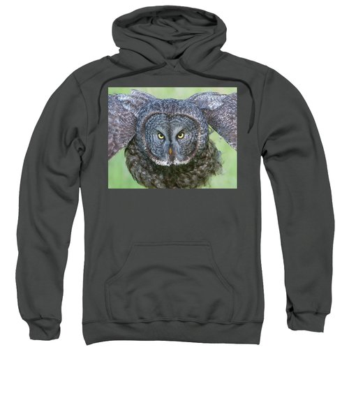 Great Gray Owl Flight Portrait Sweatshirt