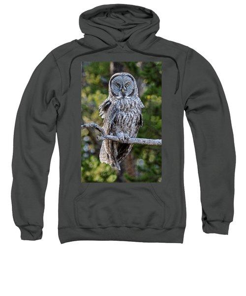 Great Grey Owl Yellowstone Sweatshirt
