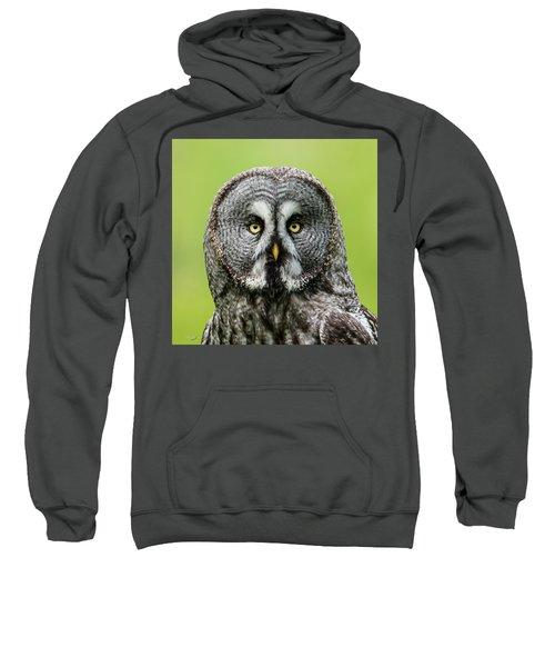 Great Grey's Portrait Closeup Square Sweatshirt