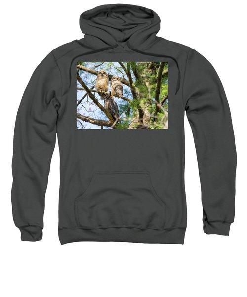 Great Horned Owl Family Sweatshirt