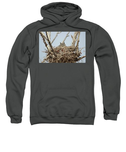 Greathornedowl3 Sweatshirt