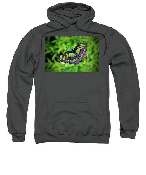Green And Black Butterfly Sweatshirt
