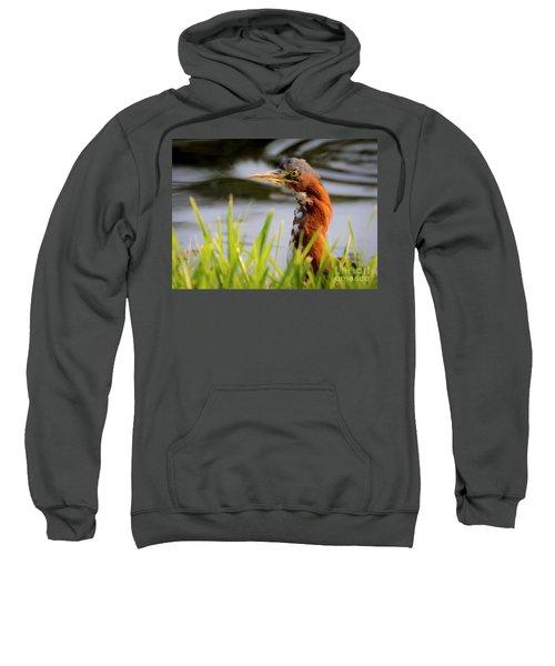Green Heron Closeup  Sweatshirt
