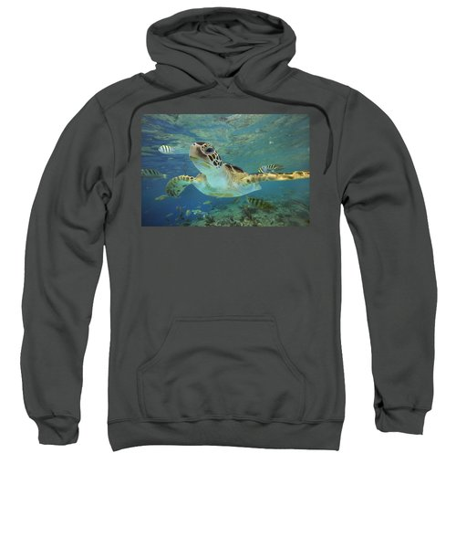 Green Sea Turtle Chelonia Mydas Sweatshirt