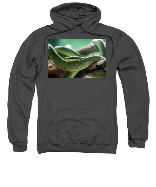 Green Snake On The Branch Sweatshirt