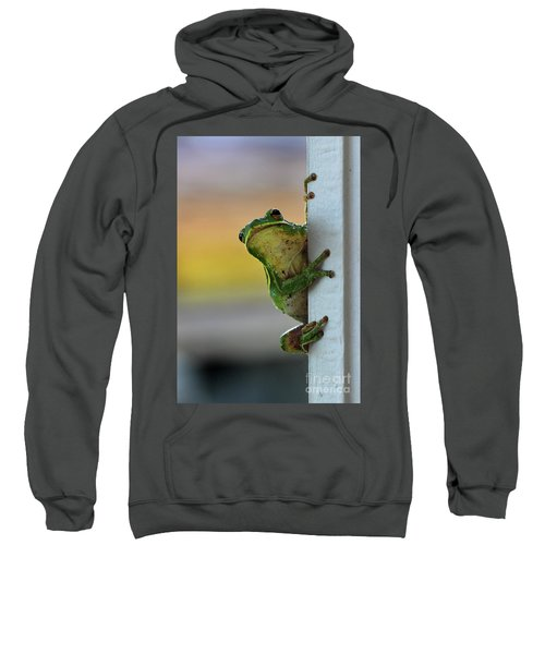 Green Tree Frog  It's Not Easy Being Green Sweatshirt