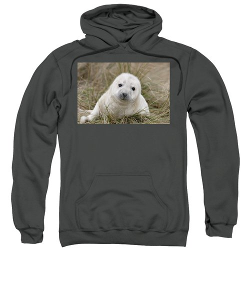 Grey Seal Pup Sweatshirt