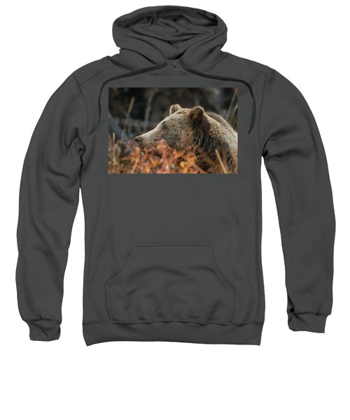 Grizzly Bear Portrait In Fall Sweatshirt