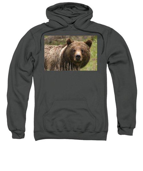 Grizzly Portrait Sweatshirt