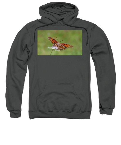 Gulf Fritillary On Elephantsfoot Sweatshirt
