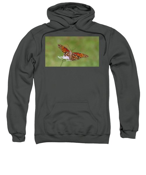 Gulf Fritillary On Elephantsfoot Sweatshirt