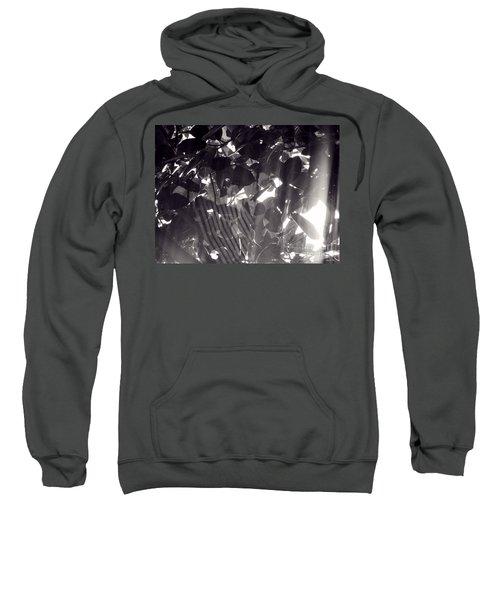 Gv Spider Phenomena Sweatshirt