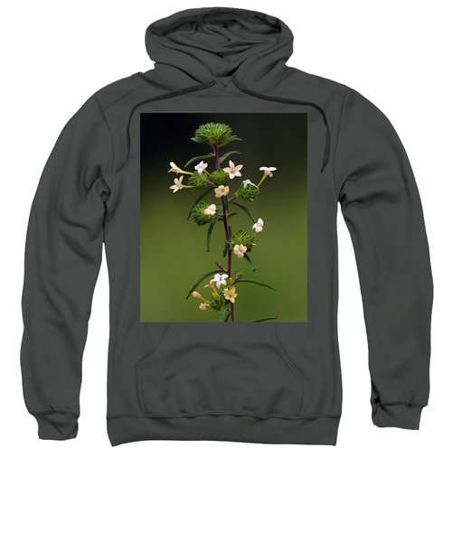 Happy Flowers Sweatshirt