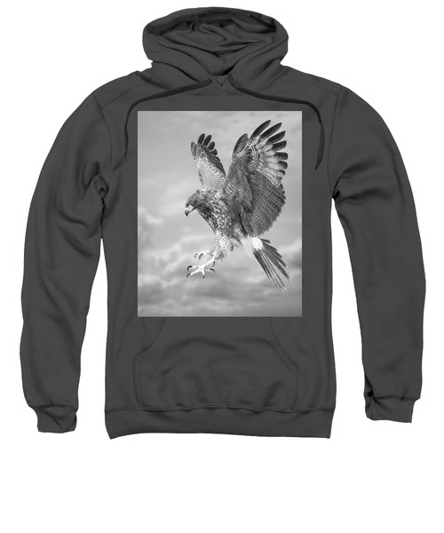 Harris's Hawk Sweatshirt