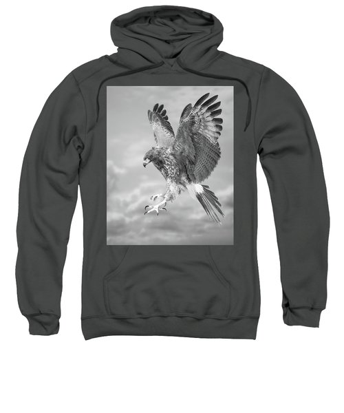 Harris's Hawk Sweatshirt