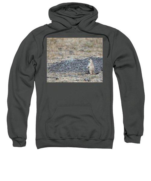 Having A Look Sweatshirt
