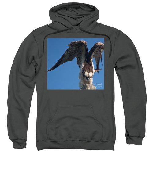 Hawk Prepares For Flight Sweatshirt