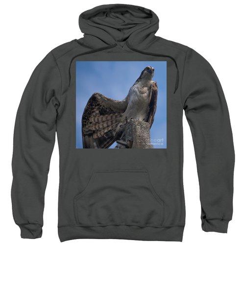 Hawk Stretching Sweatshirt