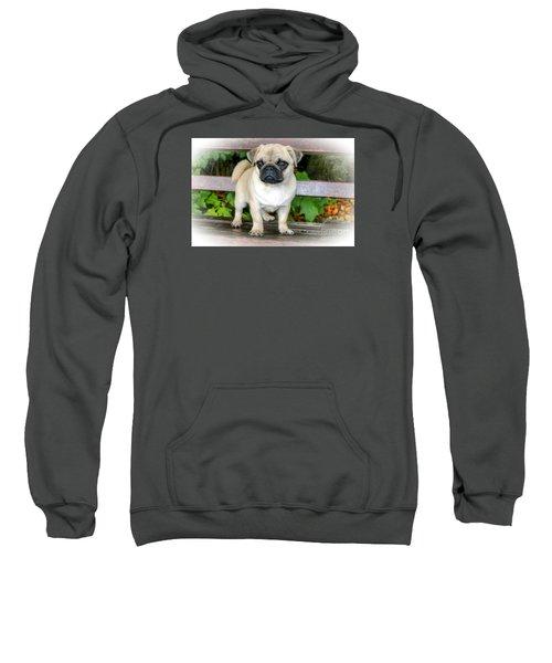 Heathcliff The Pug Sweatshirt