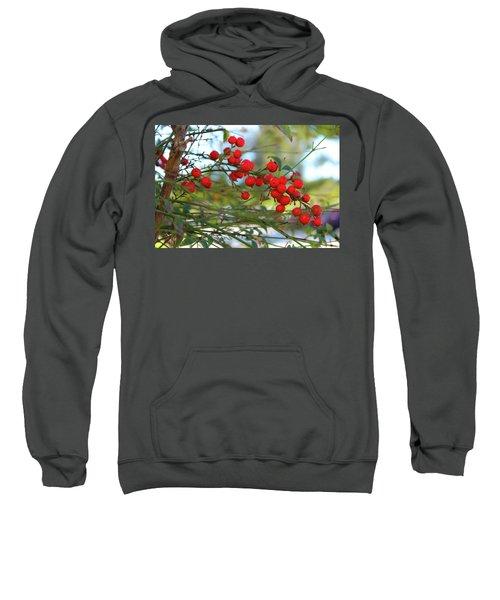 Heavenly Bamboo Sweatshirt