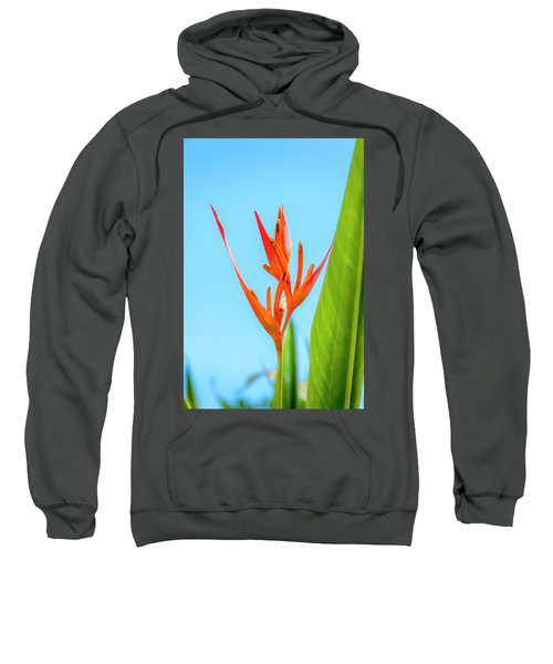 Heliconia Flower Sweatshirt