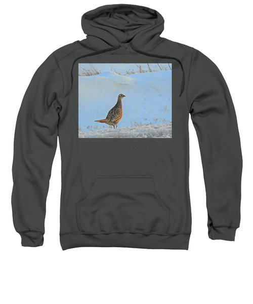 Hen Pheasant Sweatshirt