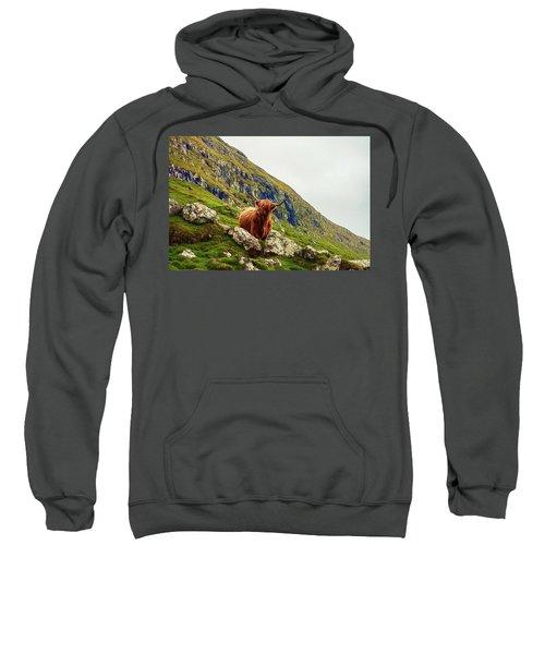Highland Cow 2 Sweatshirt