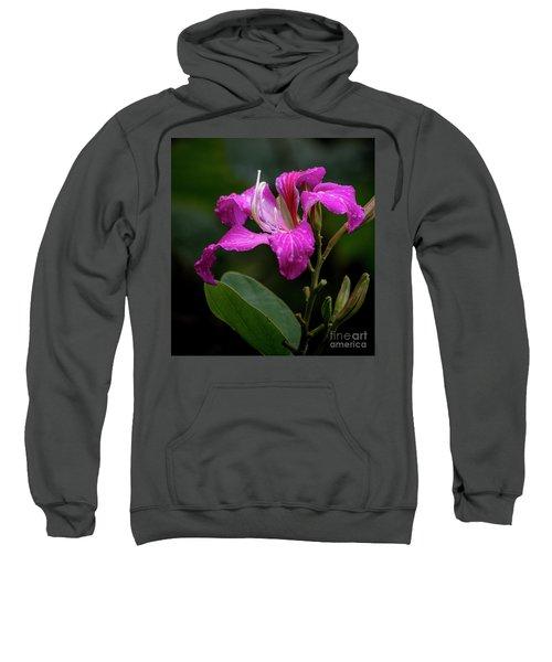 Hong Kong Orchid Sweatshirt
