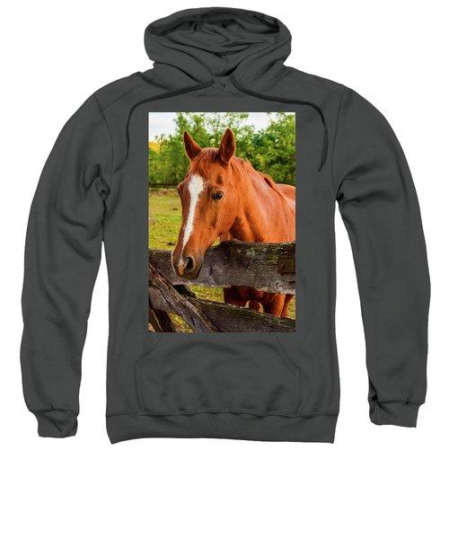 Horse Friends Sweatshirt