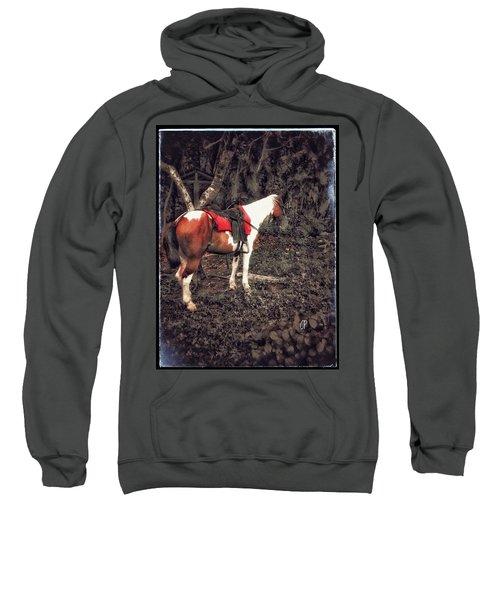 Horse In Red Sweatshirt