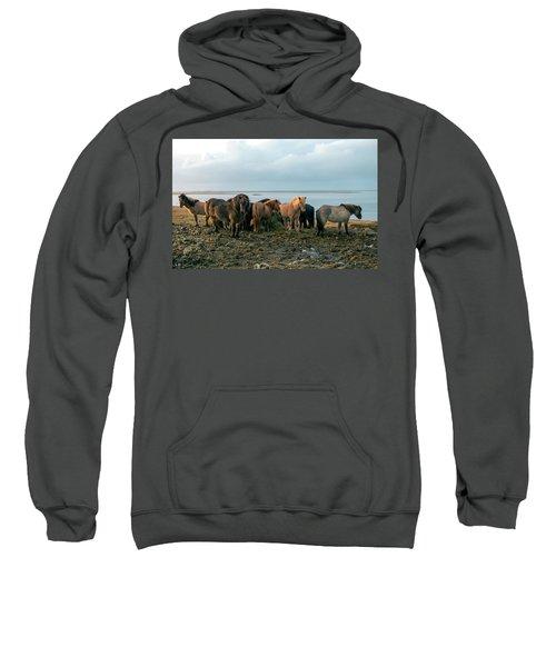 Horses In Iceland Sweatshirt