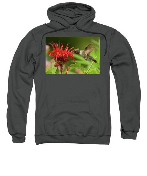 Hummingbird Delight Sweatshirt