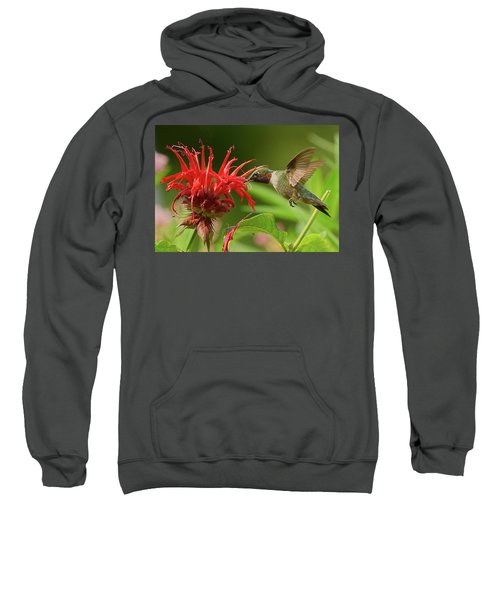 Hummingbird Delight Sweatshirt