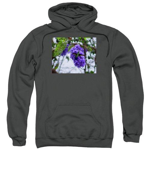 Hummingbird In A Jacaranda Tree Sweatshirt