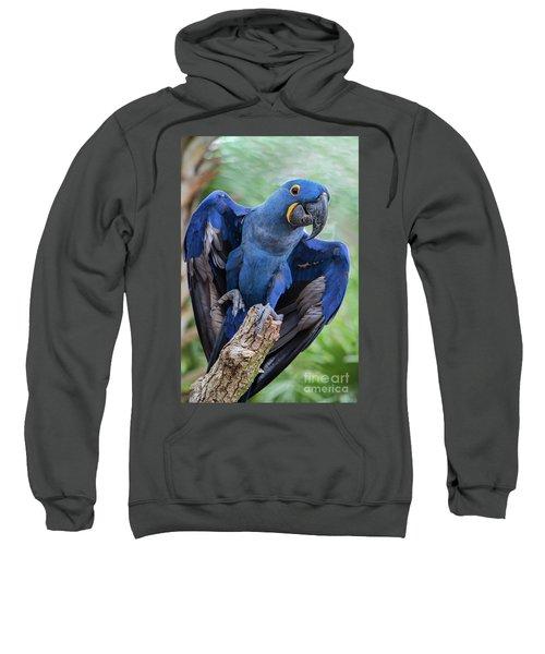 Hyacinth Macaw Sweatshirt