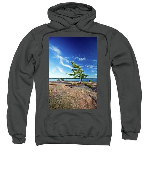 Iconic Windswept Pine Sweatshirt