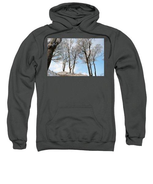 Icy Trees Sweatshirt