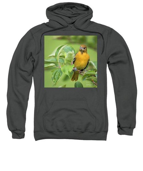Immature Baltimore Oriole  Sweatshirt by Ricky L Jones