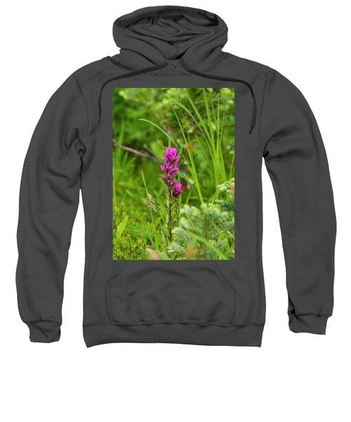 Magenta Paintbrush Sweatshirt