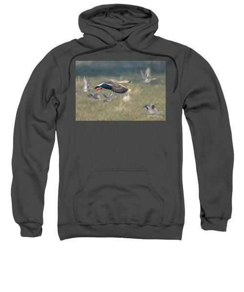 Indian Spot-billed Duck 01 Sweatshirt
