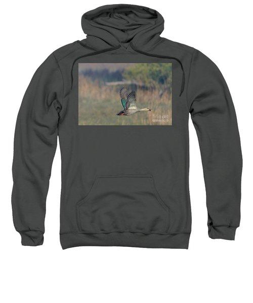 Indian Spot-billed Duck 03 Sweatshirt