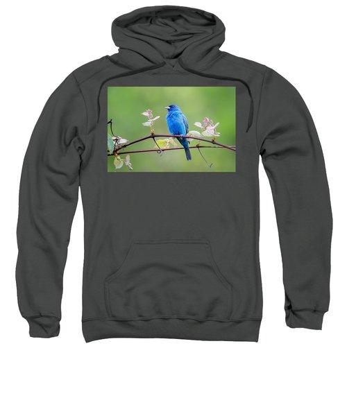 Indigo Bunting Perched Sweatshirt by Bill Wakeley