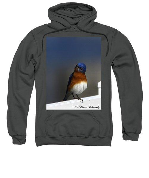 Inquisitive Bluebird Sweatshirt