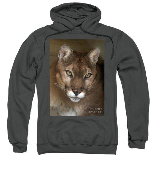 Intense Cougar Sweatshirt