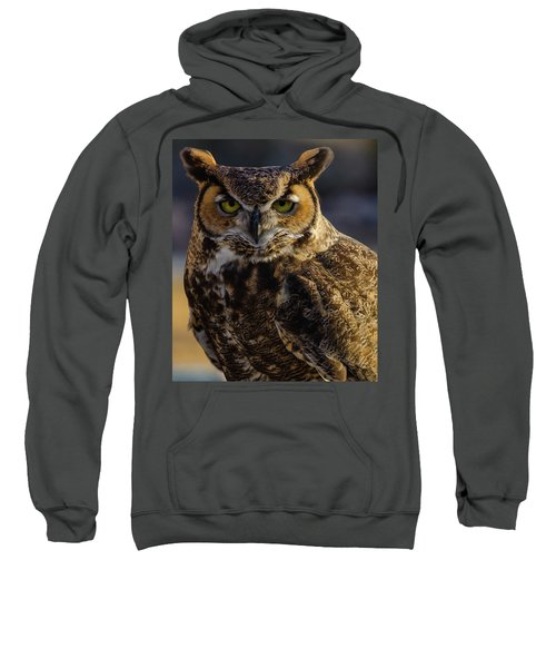 Intense Owl Sweatshirt