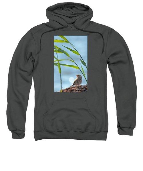 Ipswich Sparrow Sweatshirt