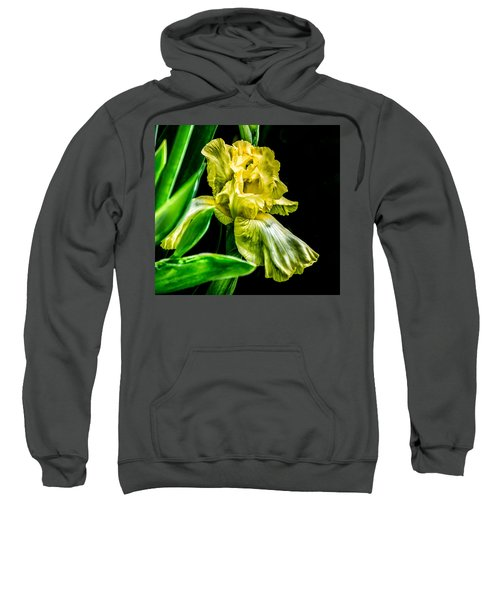 Iris In Bloom Sweatshirt
