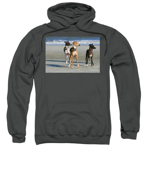 Italian Greyhounds On The Beach Sweatshirt