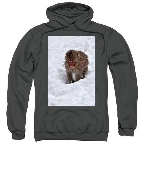 Its Here Somewhere Sweatshirt
