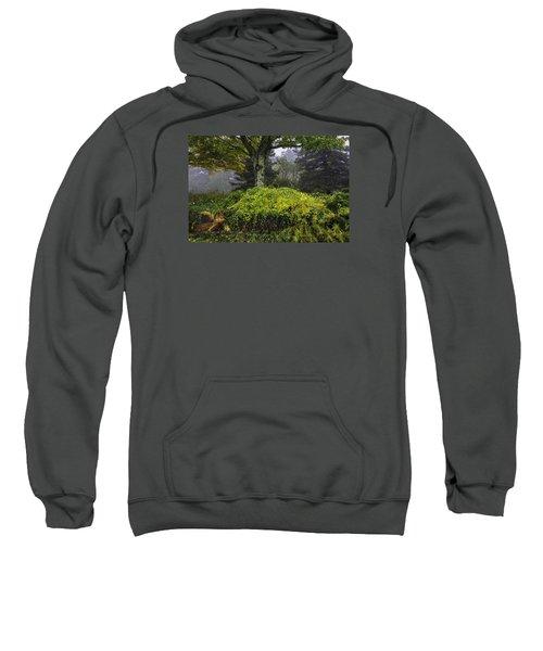 Ivy Garden Sweatshirt